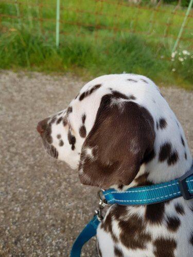 cooper puppy nieuwe man aan mijn voeten
