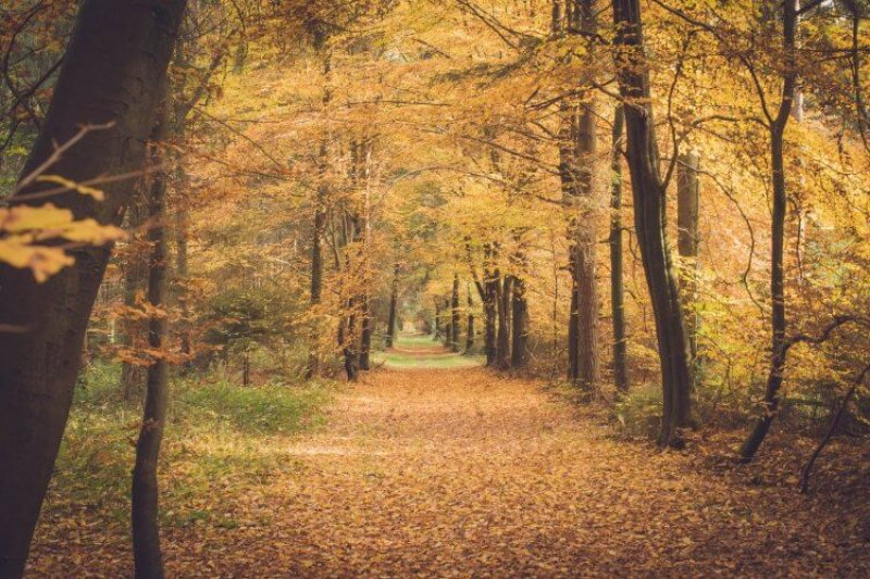 autumn-2948294_1920