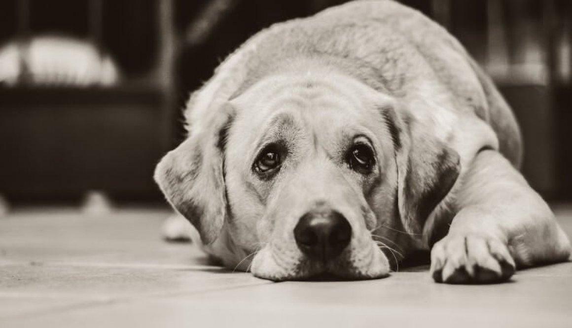 dog 1126025_1920