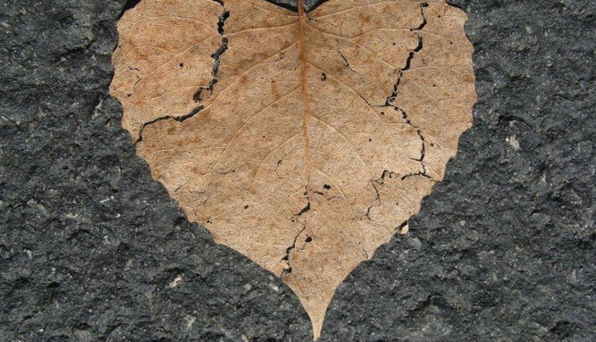 heart 742712_1920
