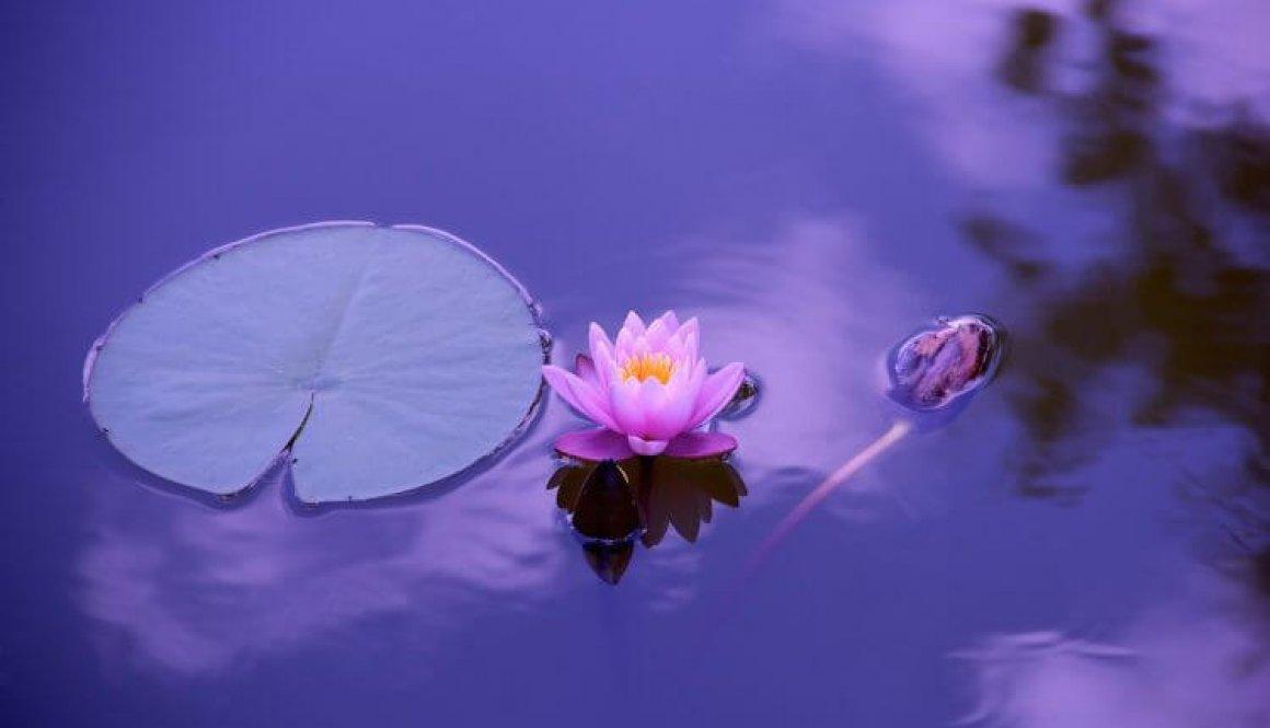 ontvouw - lotus 1205631_1920